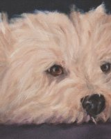"""Woody my Westie (Oil on box canvas size 16"""" x 12"""")SOLD"""