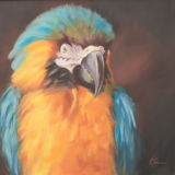 """Mac (Oil on canvas, size 24"""" x 24"""" unframed) SOLD"""