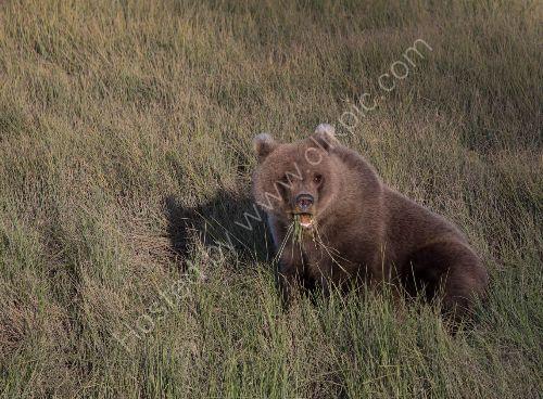 Grass for dinner please!