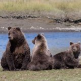 Three bears relaxing