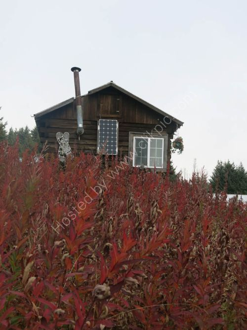 Seldovia with Fireweed