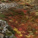 Fall Colours, inland Iceland