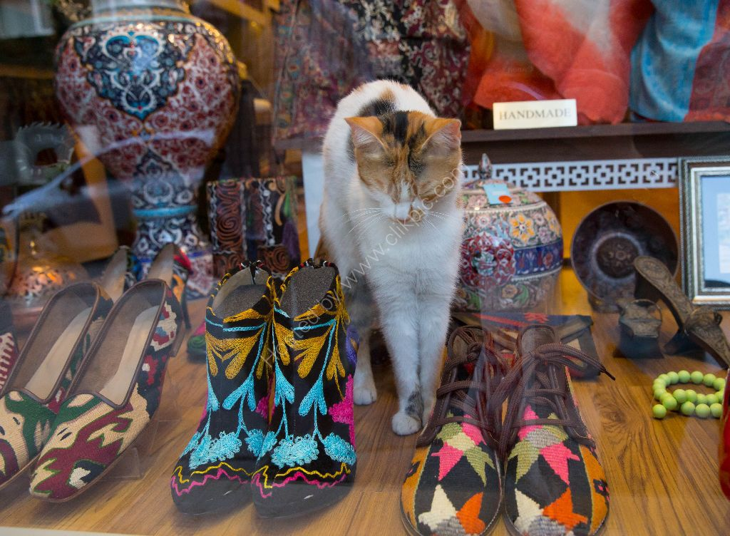 Cats are much loved in Turkey