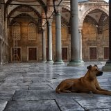 The Mosque Dog, Istanbul