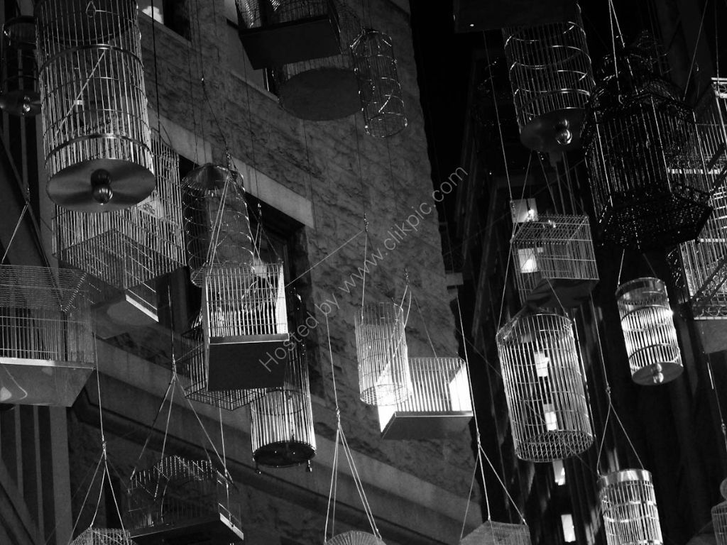 Birdcages above an alleyway in old Sydney