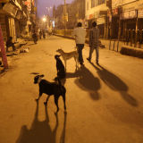 Varanasi street  early morning