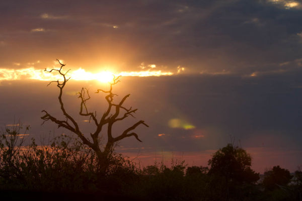 Stunning Serengeti Sunset