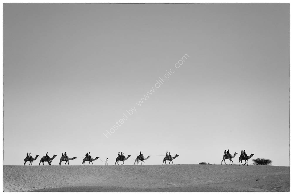 Camels on the horizon