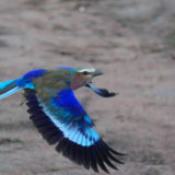 Stunning Bird life