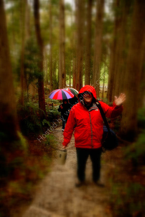 Tasmania has beautiful bush - even in the rain!