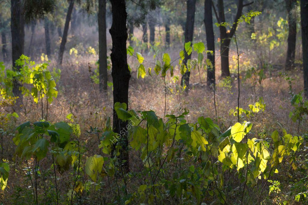 Forest    Park - Jinan