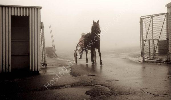Horse racing -New Zealand