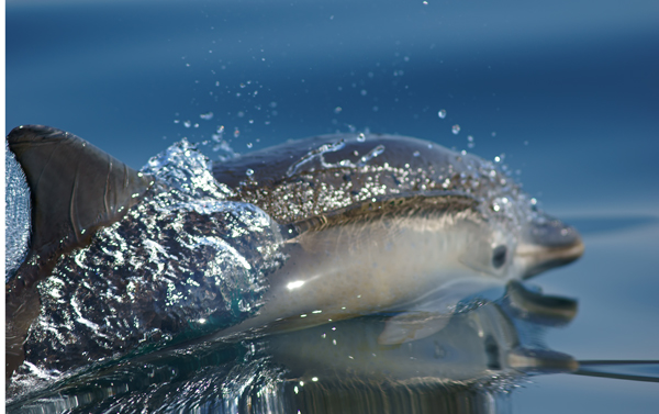 Wildlife of Pembrokeshire Coastline