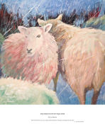 sheep sheltered as the snow began, Strath
