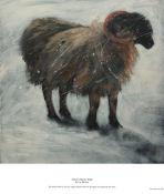 noreen's shivery sheep