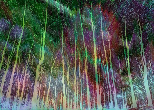 aurora wood