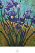 evening iris