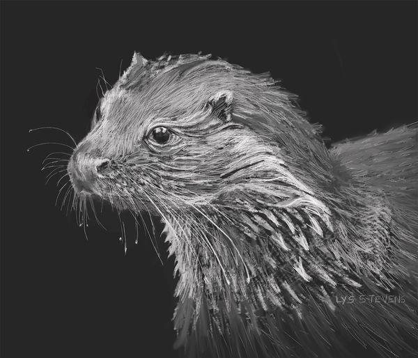 wee wet otter PRINT 20.5x24cms