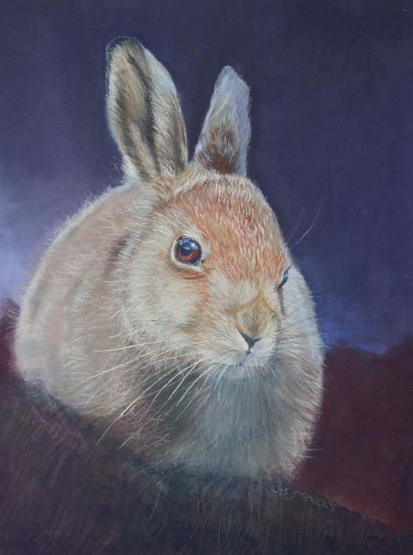 wee wise leveret