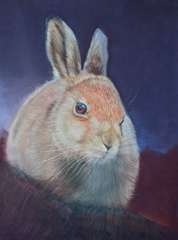 wee wise leveret PRINT 27x20cms