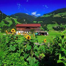 3003 Austria 03