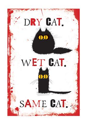 Dry Cat. Wet Cat. Same Cat.