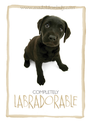 Adorable Labrador