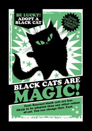 Black Cats are Magic!