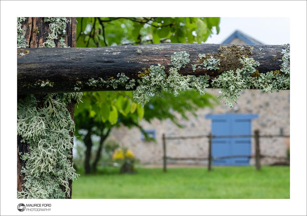 Lichen with Blue Door