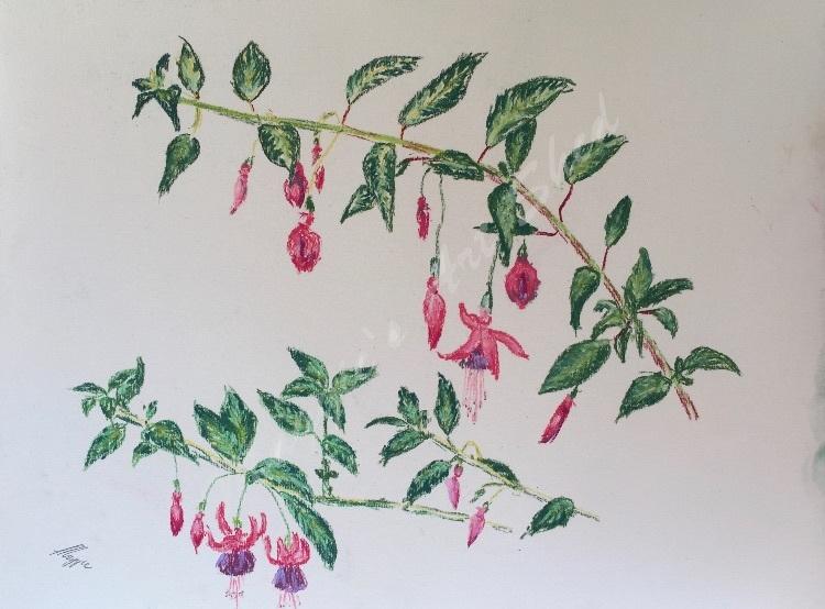 Alana's Fuchsia