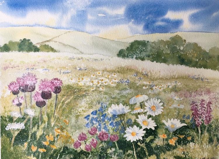 Derbyshire Meadow