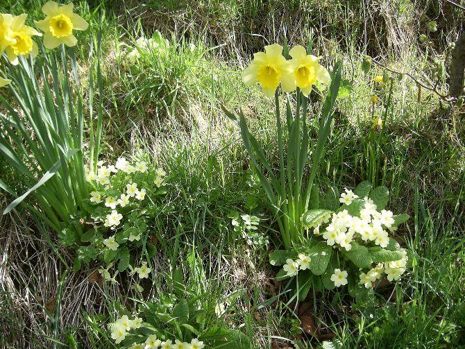 Spring is sprung!