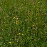 my wildlife meadow