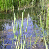 view of pond in field