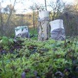 woodland series 2