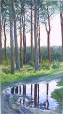Reflected Wood 1