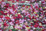 Pretty leaf litter