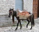 A hard life for horses too - Albania