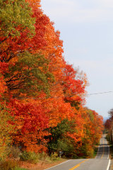 Typical Fall colours along road in Maine