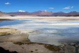 Laguna Agua Calientes, Atacama
