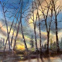 Birches At Sunset