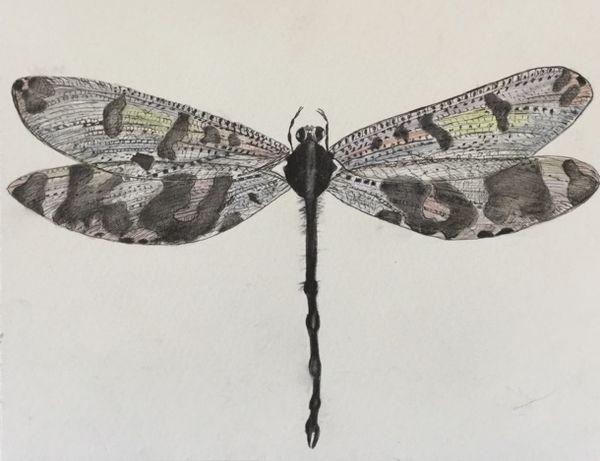 "Dragonfly, watercolour, 8x10"""