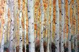 Birches, Watercolour 25 X 19 cm  £120