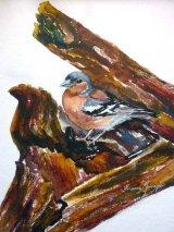 Chatfinch  Watercolour Inks  43 X 37cm  £68