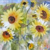 Sunflowers, watercolour, 25x25cm, £120