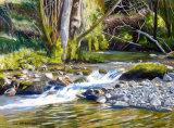 Mallard Aira Beck, Cumbria  Pastels 40 X 30cm
