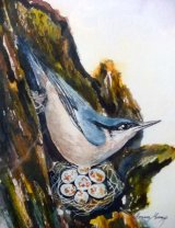 Nuthatch with Nest  Watercolour Inks  44 X 37cm  £68