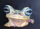 Poison Arrow Frog  38cm. x 25cm Oil NFS