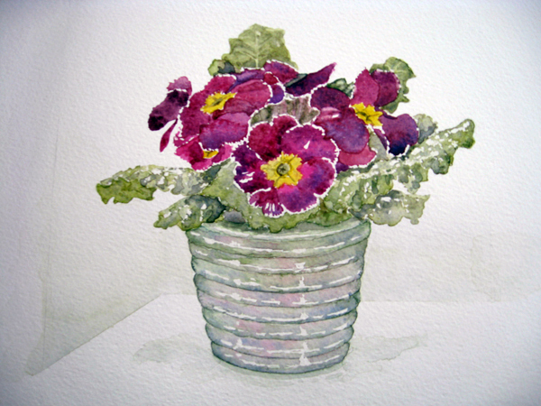 Primrose in a pot, watercolour