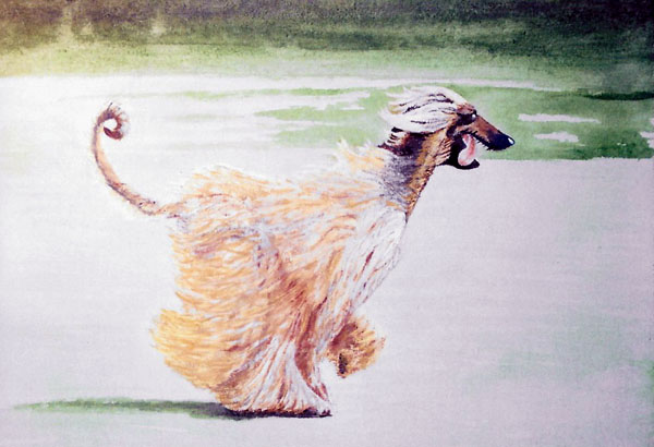 Run Free (Dog), Acrylic/Board, 30 X 40 cm, £75